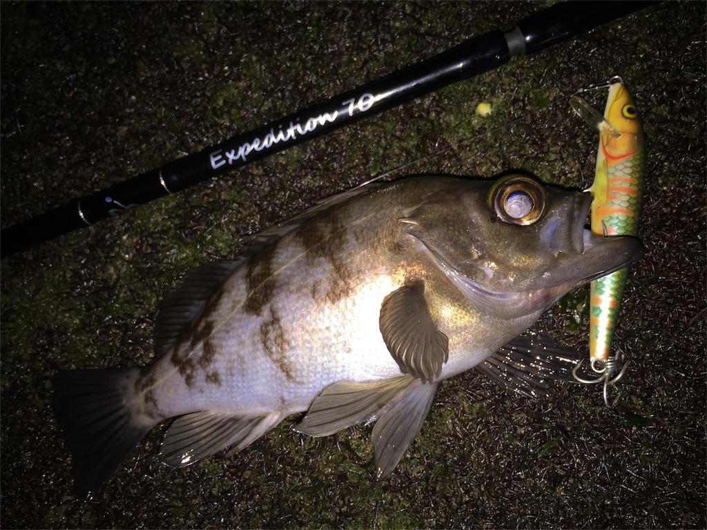 ラパラのF9で釣れたメバル