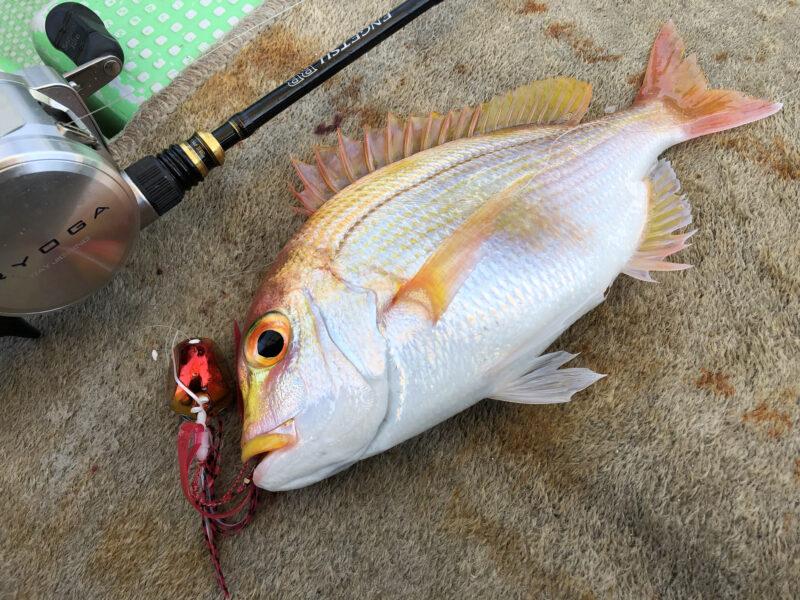タイラバで釣れたレンコダイ